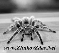 ZhukovZdes.Net – магазин шпионского оборудования и средств защиты информации