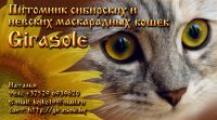 Питомник сибирских кошек Girasole