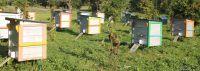 Смоленский мёд